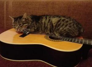 Nie kupuj kotu gitary, bo...