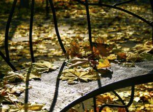 Magia jesieni – czyli smutek do kosza ;-)
