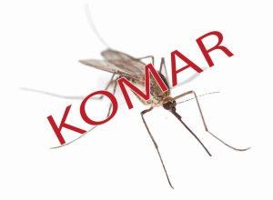 Komar– polski bzykacz na tropie krwi