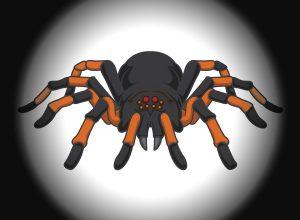 Polskie pająki– niepotrzebna panika, czy słuszna obawa?
