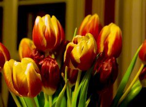 Przypomnienie o kwiatku